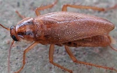 cockroach exterminator naples