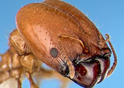 Ant Extermination Services