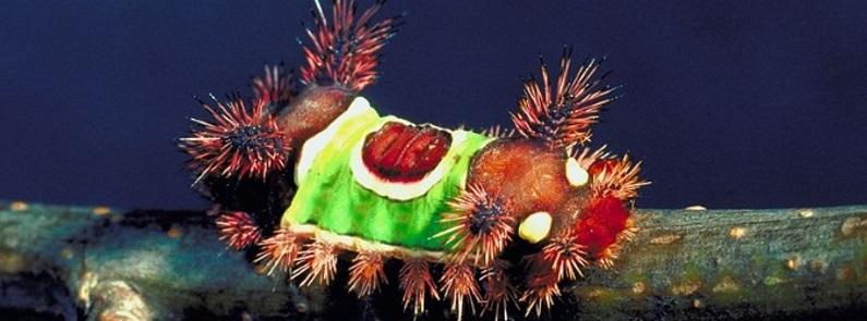 Caterpillar Identification Southwest Florida