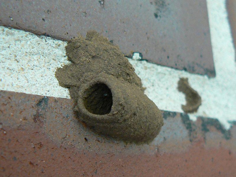Common Wasps In Southwest Florida Naples Fl Premier