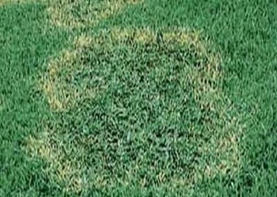 Lawn and Landscape Fertilization Services