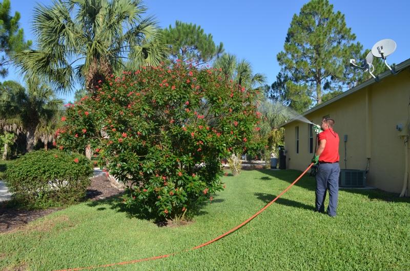 naples lawn pest control, tech spraying bushes