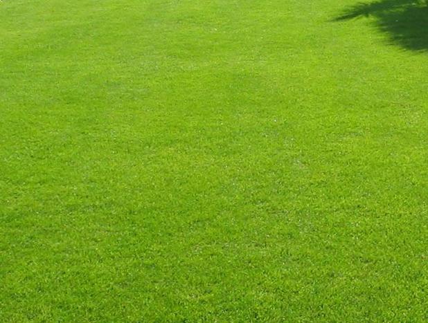 naples fl lawn fertilization services